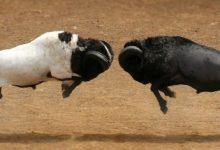 ilustrasi orang suka adu domba
